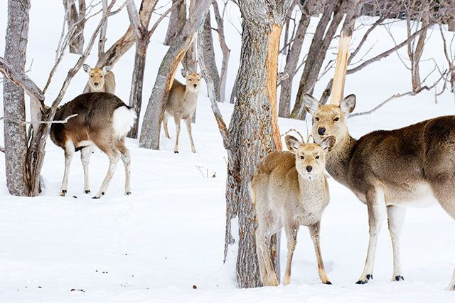 Shiretoko, Hokkaido 💖Waterfalls, wildlife and brown bears bless Japan's northern most island.  💖#Japan #travel