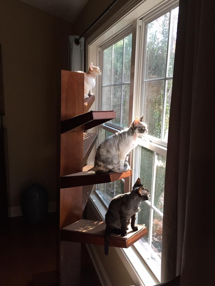 Cats bird watching on the Catalpa Cat Tree from TheRefinedFeline.com