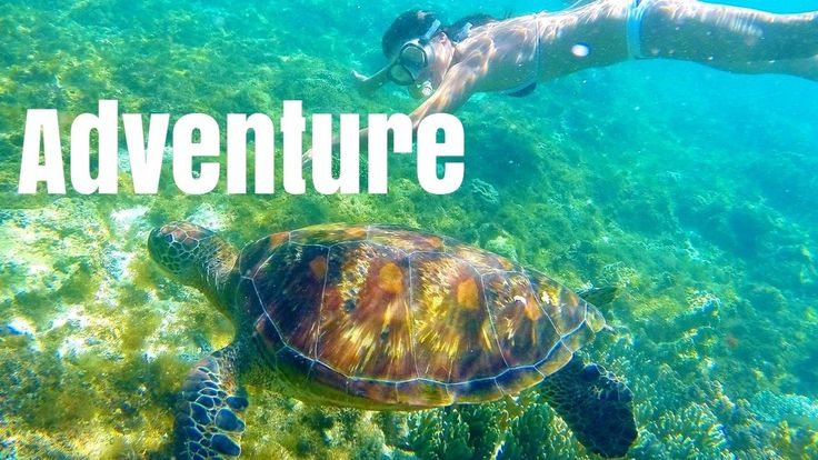 Adventure GUIDE in the Philippines! Dumaguete Apo Island and Siquijor! #backpacker #travel #backpacking #ttot #tent #traveling https://www.youtube.com/watch?v=FWogQNEP6Y0
