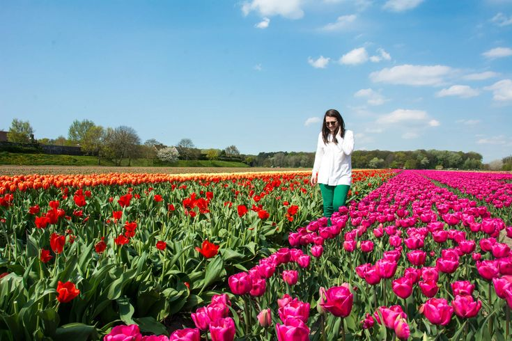 Amsterdam in April? The Best Months to Visit 12 European Countries.