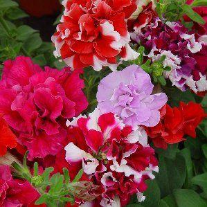 17 best images about plantas on pinterest the smalls - Plantas de interior resistentes ...