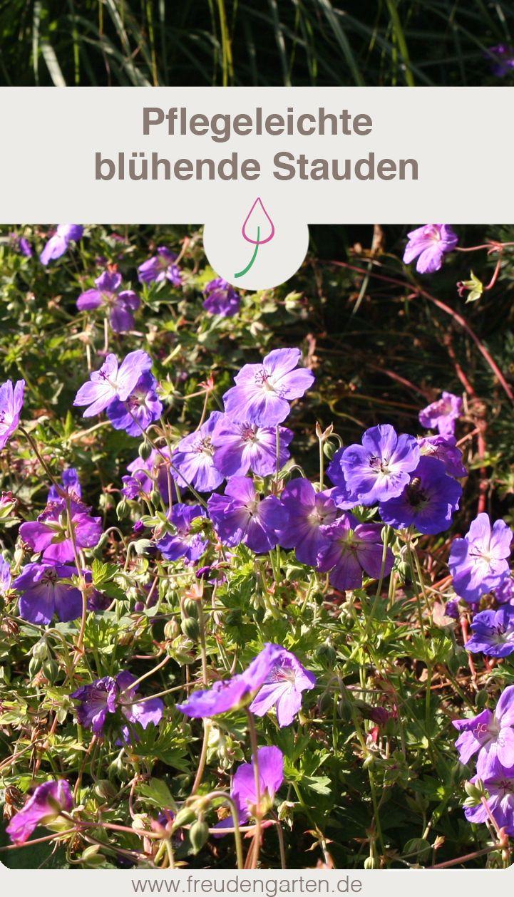 11+ 8 pflegeleichte Gartenpflanzen, die keine Mühe machen   Stauden ... Fotografie