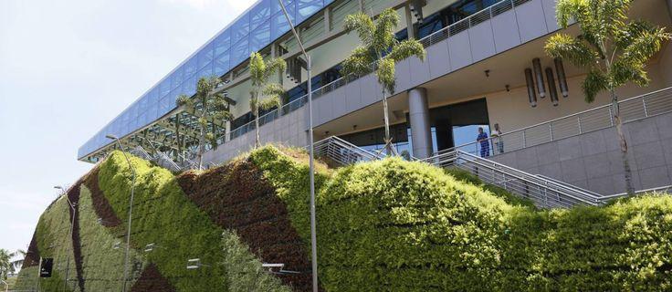 Parede verde do Shopping Metropolitano, na Barra, tem 1.600 metros quadrados de área e funciona como barreira termoacústica Foto: Camilla Maia