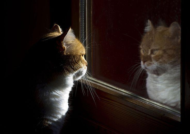 Fissai i miei occhi riflessi nello  specchio come non facevo da tempo, ma non riuscii a riconoscere il vero Hajime. [Nel link FILM, di Buster Keaton e Samuel Beckett]