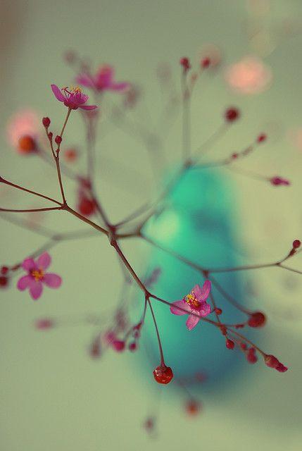 \\/´|: Bokeh Photography, Bokeh Color, Macro Photography, Flower Beauty, Pretty Colors, Color Pallets, Flower Power, Color Photography