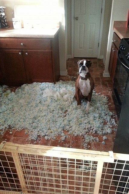 """11 Dogs Who Have No Idea Where This Mess Came From #refinery29 http://www.refinery29.com/the-dodo/70#slide5 """"I swear, I'm just as baffled as you are."""""""