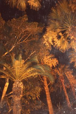 Palm n2