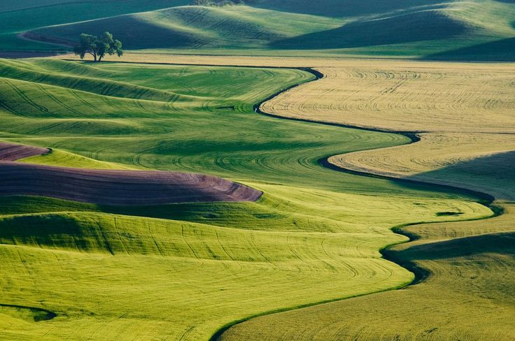 """""""Tree in Wheat Fields"""" - photo by Jia han Dong, via SmithsonianMag;  curves in the Palouse, Washington;  Finalist in the Smithsonian Magazine 'American Experience' photo contest, 2009"""