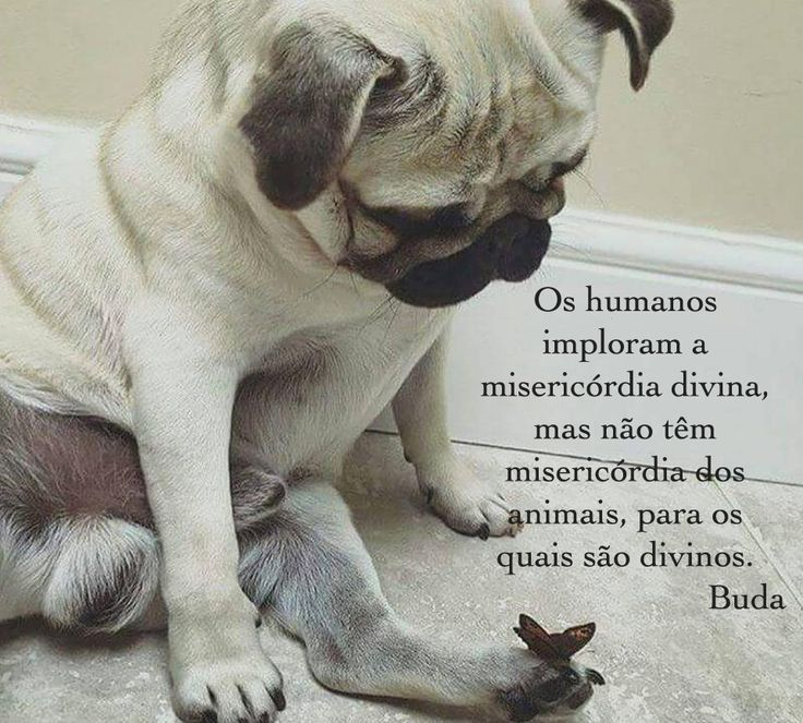 Preferência 13 best Frases sobre Animais images on Pinterest | Quotes about  HD47