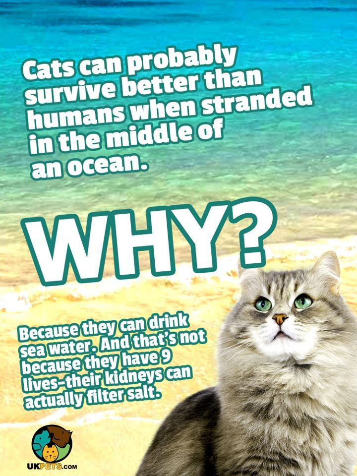 Cats Can Drink Sea Water Catsandkittens Catfacts Funnycats Animalfacst Catquotes Pets Cat Cats Cats And Kittens Pet Blog Cat Quotes
