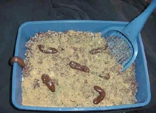 Kitty litter cake for April Fool's?? There is no way. Gag!