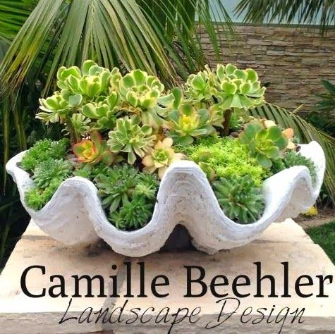 Succulent Shell Planter Ideas for Inside and Out! http://www.completely-coastal.com/2014/05/succulent-shell-planter-ideas.html