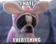 LOLPuppies, Dogs, Dresses Up, Pets, Easter Bunnies, Funny, Boston Terriers, Animal, A Christmas Stories