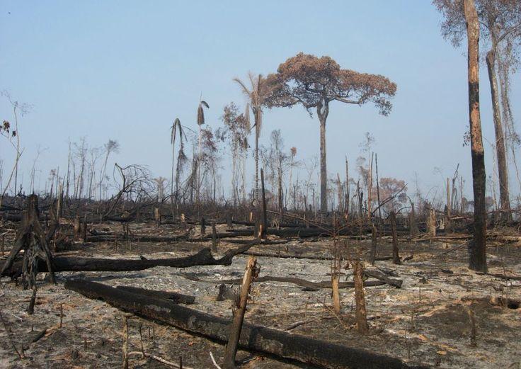 Grandes proprietários, a causa do desflorestamento na Amazônia. Um estudo demonstra que a destruição da selva, freada durante quase uma década, voltou a aumentar em 2013 . http://brasil.elpais.com/brasil/2014/10/13/ciencia/1413222640_280888.html