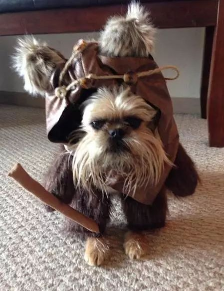 ewok dog costume shih tzu 25 best ideas about ewok dog costume on pinterest names 5103