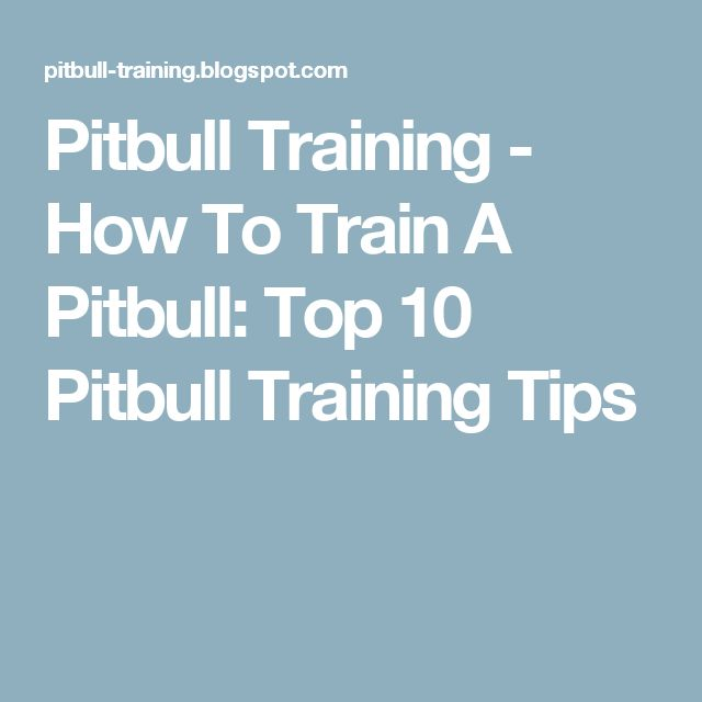 Pitbull Training - How To Train A Pitbull: Top 10 Pitbull Training Tips