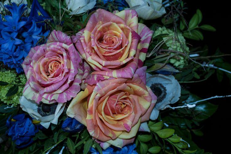 Ecuador Rose Fiesta