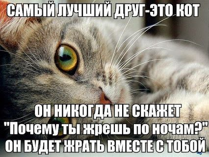 Света Дьякова – Google+