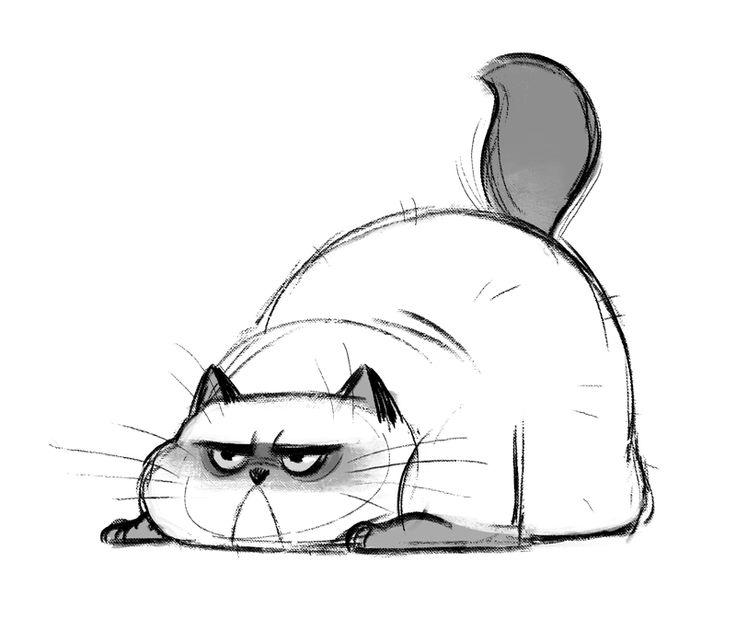 Фото поздравления, прикольные картинки карандашом котиков