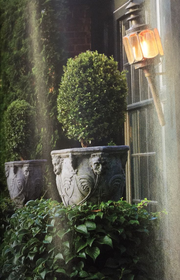 Classic Stone Urns With Boxwood.
