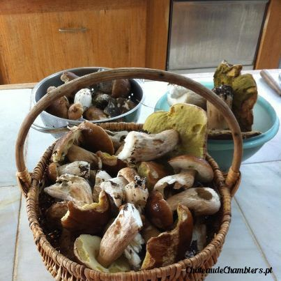 A beautiful mushrooms harvest in the park of Chateau de Chambiers by this rainy weather...