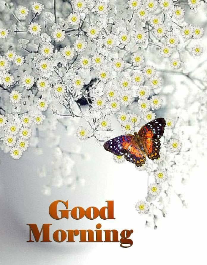 White Flower Good Morning Butterfly Image Morning Good Morning Good