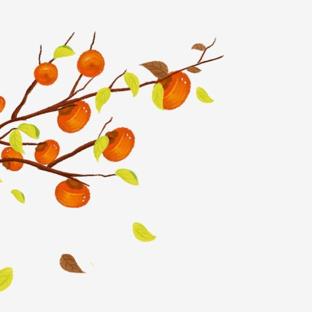 Hand Painted Fruit Watercolor Orange Persimmon Fall Food Harvest Persimmon Tree Cartoon Tree Clipart Food Clipart Cartoon Trees Cartoon Clip Art Tree Painting