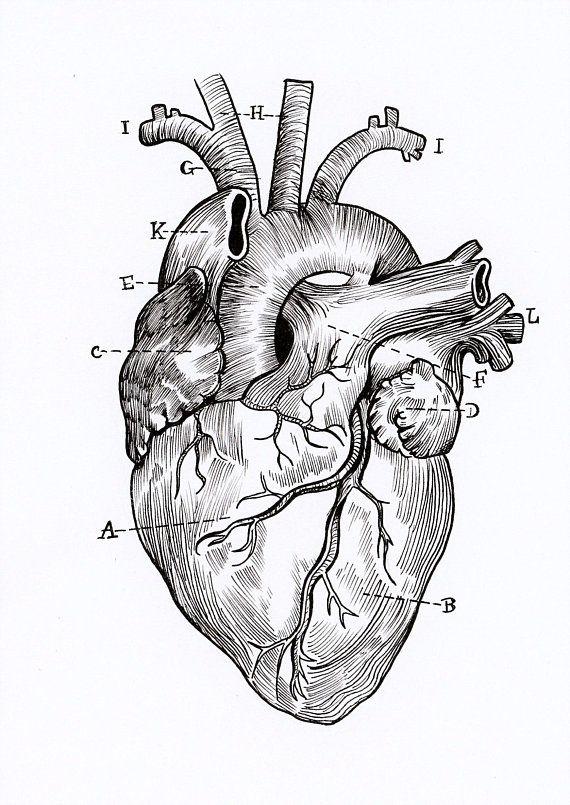 A5 Print Anatomical Heart Diagram Stories Pinterest
