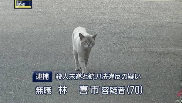 思わず保存した動物画像うぃぃぃ : ハムスター速報