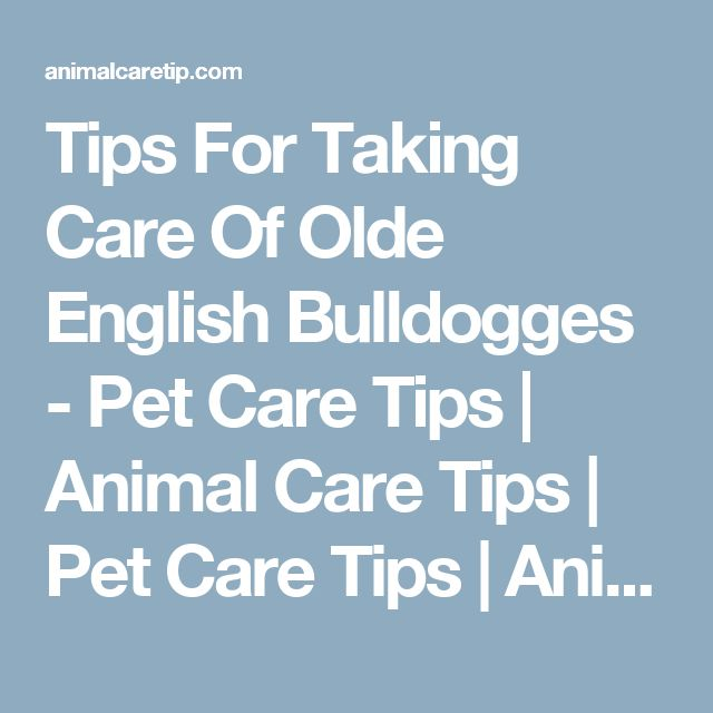 Tips For Taking Care Of Olde English Bulldogges - Pet Care Tips | Animal Care Tips | Pet Care Tips | Animal Care Tips
