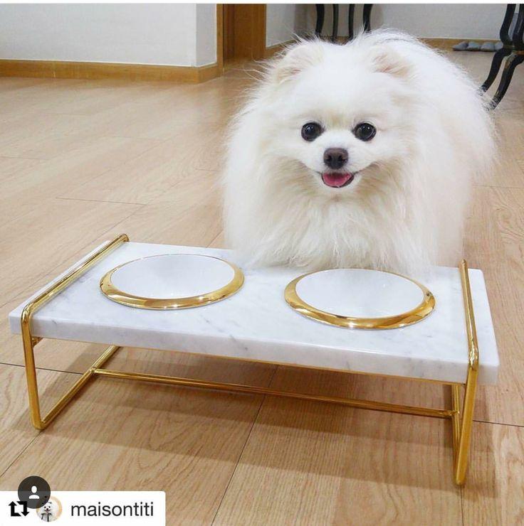 #대리석식탁#히스핸드#디어마이펫#골드스틸마블펫테이블 #dog #dogbowl #catbowl #pet-marbletable  #dogstagram #petsagram  #dogstyle #partypomeranian #partypom#멍스타그램 #반려견  http://storefarm.naver.com/hishand