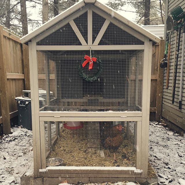 Easy Backyard Chicken Coop Plans   Do It Yourself Today
