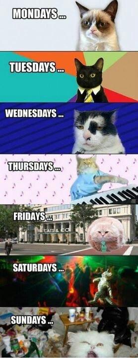 Kitty week