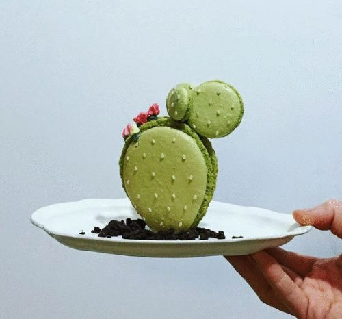Image result for cactus gif