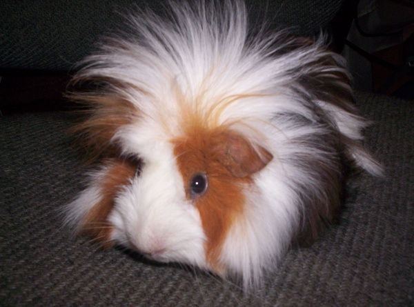 Tell me that's NOT the most adorable puff of furry cuteness you've ever seen!