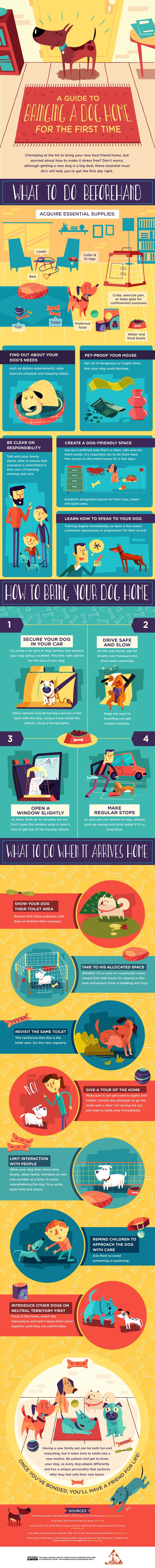 A Guide To Bringing a Dog Home For The First Time #Infographic #Animal #Dogs