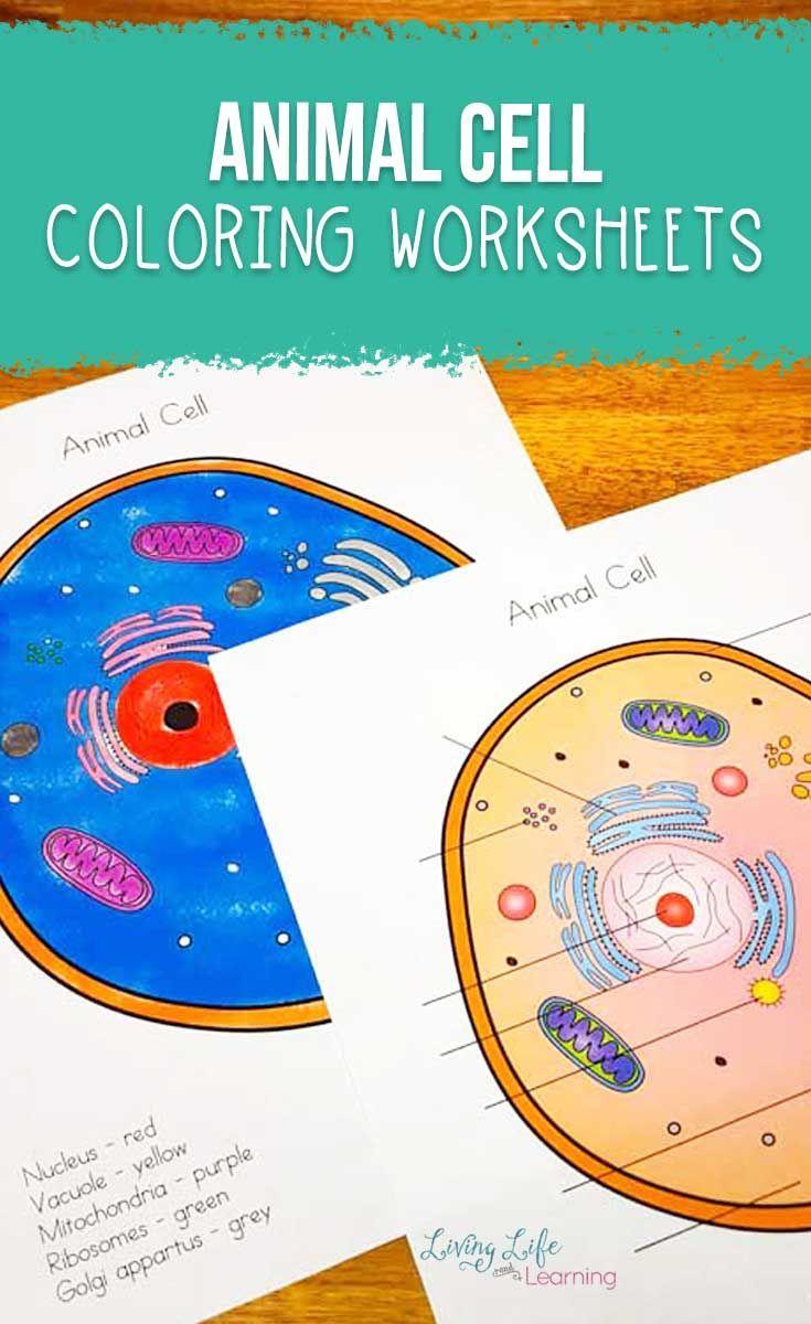 Animal Cell Coloring Worksheet Animal Cell Elementary Science Activities Kindergarten Science Activities [ 1200 x 735 Pixel ]