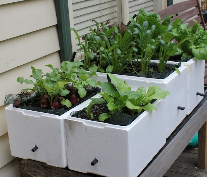 Capillary Self Watering Method -- good instructions to set up
