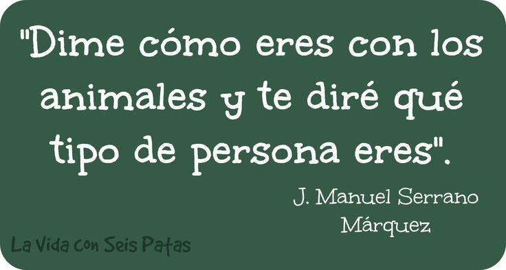 qué tipo de persona eres http://lavidaconseispatas.blogspot.com.es/p/frases-perrunas.html