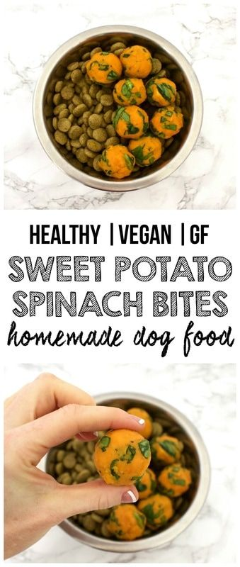 Healthy Homemade Dog Food: Sweet Potato & Spinach Bites! (Vegan, Gluten-Free)