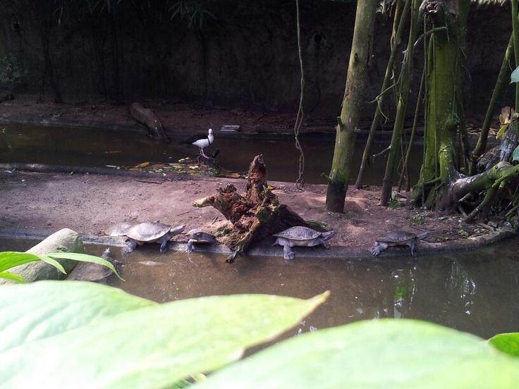 Burgers Zoo : Mangrove Arnhem