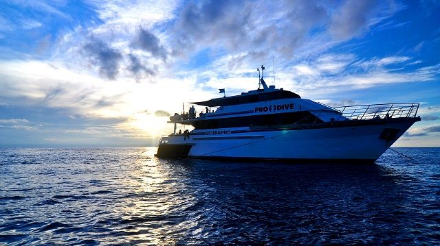 Great Barrier Reef 3 Day Cod Hole, Ribbon Reefs - Spirit of Freedom - Scuba Diving with Pro Dive Cairns Australia