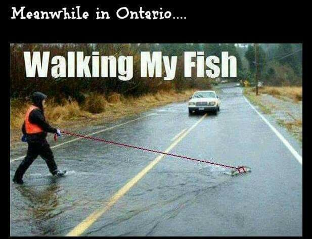 Basic ontario for you lol