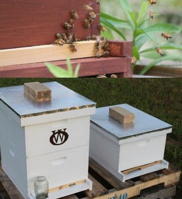 The Homestead Survival | How To Prepare The Honeybee Hives For Winter | Beekeeping - Bees - Homesteading - http://thehomesteadsurvival.com