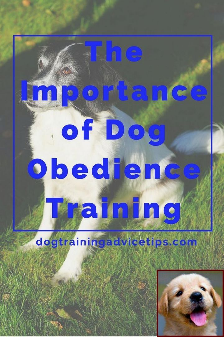 House Training A Puppy In Apartment And Dog Training Courses In