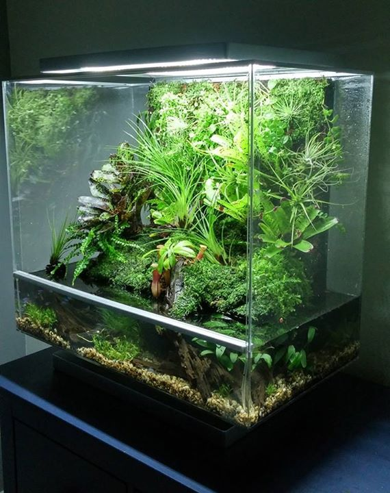 1132 best vivarium terrarium images on pinterest for Fish tank terrarium
