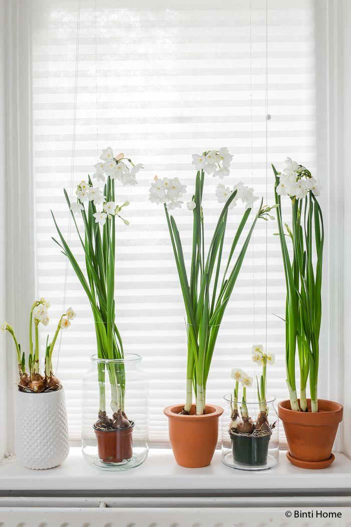 Love these potted narcissus! :) Woonplant : Styling met de narcis in mijn keuken | Binti Home blog : Interieurinspiratie, woonideeën en stylingtips