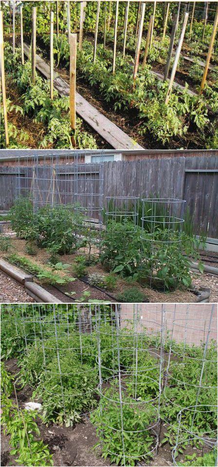 Способы подвязывания и поддержки томатов (помидор) во время роста.   Вс   Сад, огород   Постила