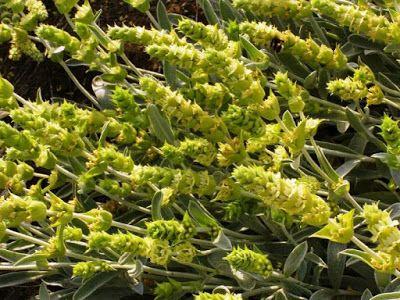 Τσάι Ολύμπου: νέα αγροτική καλλιέργεια με χαμηλό ρίσκο http://ift.tt/2sKP92Q