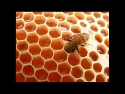 Time Lapse del desarrollo de una abeja obrera, desde el estado de huevo, larva, prepupa, pupa y finalmente una abeja adulta. Las abejas obreras viven 21 días...